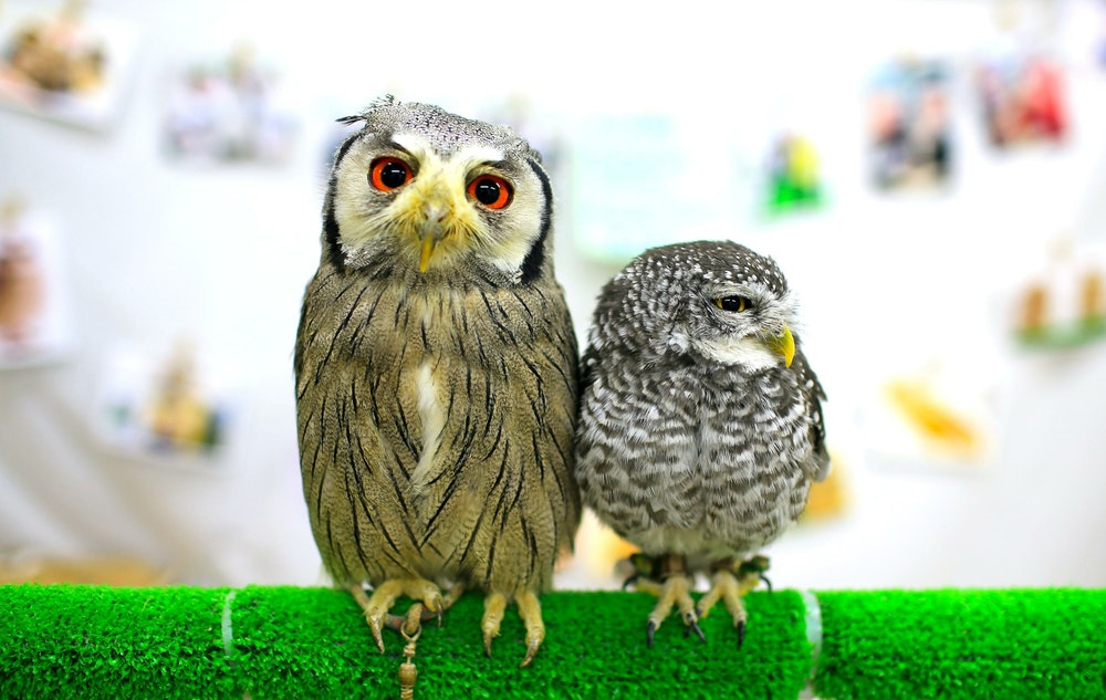 Image of an Owl Cafe