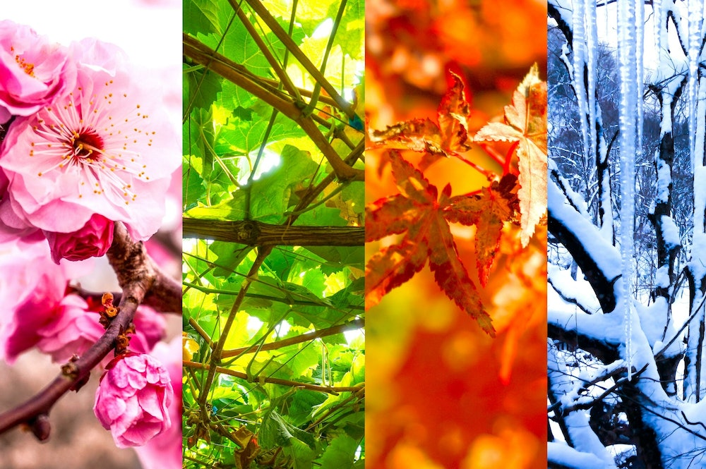 Image of Japan's four seasons