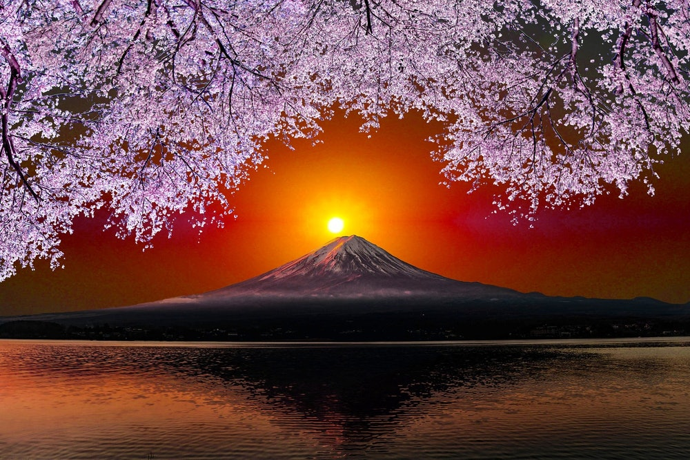 Image of Mt. Fuji and cherry blossoms