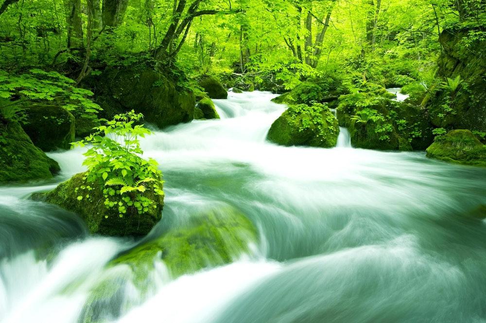 Image of the fresh greenery of Oirase Gorge